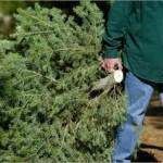 HOG Christmas tree recycling