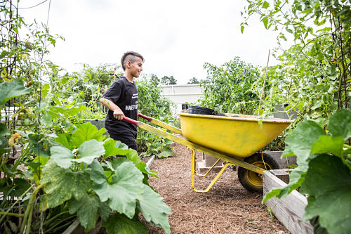 Gardening_opt